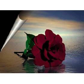 Imagem de uma rosa vermelha